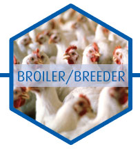 Poultry broiler/breeder biocides