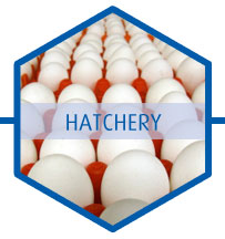 Poultry hatchery biocides
