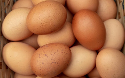 Biosecurity for poultry layer farming